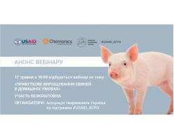 Прибыльное выращивание свиней в домашних условиях