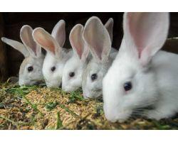 Как кормить кроликов — в чем преимущества комбикорма