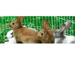 Почему болит живот у кроликов