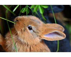 Наиболее распространенные заразные болезни кроликов и их лечение