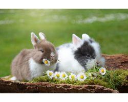 Кормление кроликов комбикормом: какой выбрать и как давать