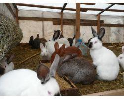 Кормление кроликов комбикормом: советы по улучшению рациона