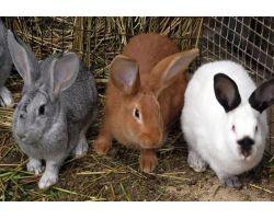 Лучшие породы кроликов для разведения: как выбрать?