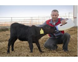 Вплив макро- і мікроелементів на здоров'я і продуктивність великої рогатої худоби