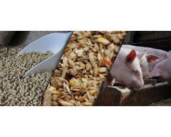 Рецепт качественного и выгодного комбикорма для свиней: как сделать рациональный корм в домашних условиях