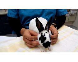 Основные болезни кроликов: симптомы и профилактика наиболее частых заболеваний