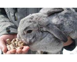 Инструкция по изготовлению комбикорма для кроликов в домашних условиях