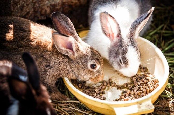 комбикорм для кроля