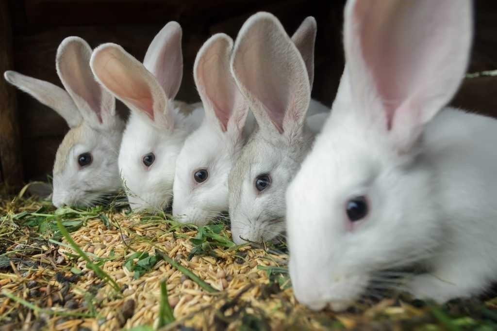выбрать корм для кролика