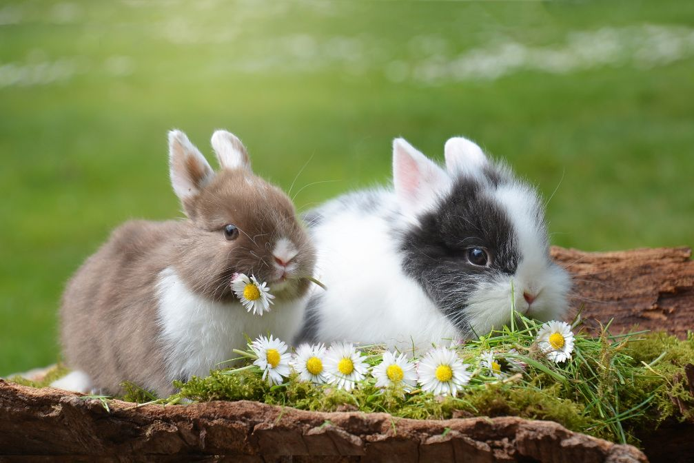 кормления кроликов комбикормом