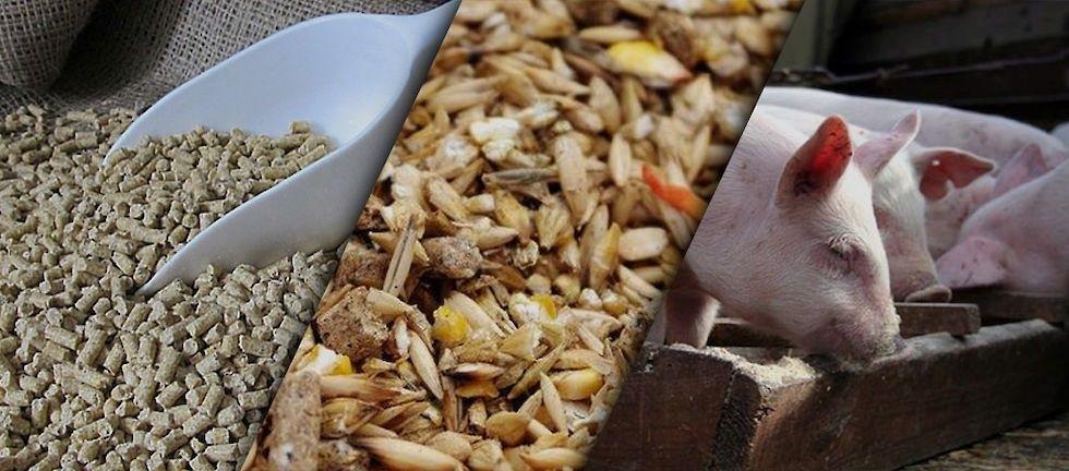 разный корм для свиней авамаркет