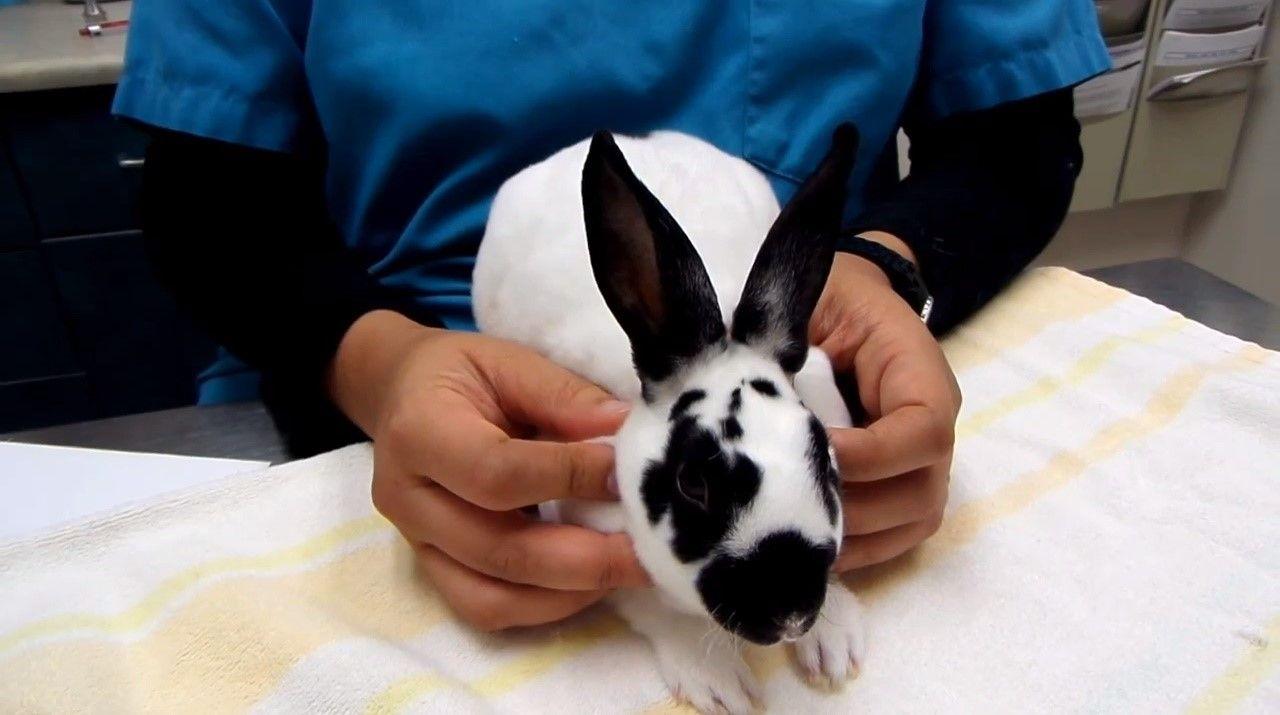 основні хвороби кролів